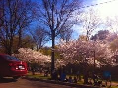 Spring in Toronto_9